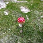 грибы)