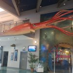 A giant squid greets you at the entrance!
