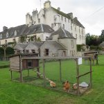Chickens and house