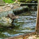 The Decisive Moment (Sea Otters)