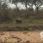 Rhino tracked down on foot