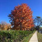 Government House is spectacular in the autumn! Vibrant trees and deep blue skies!