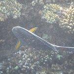 Photo of Sea Club Royal Nubian Island