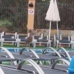 Villa Mandi Golf Resort Photo