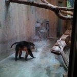 In the Primate building 1