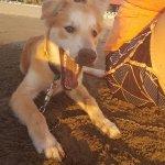 Mango!!! The best doggy!!