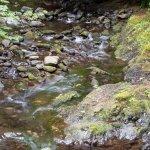 creek before the falls