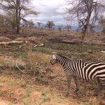 Photo of Amboseli National Park