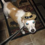 Cody with a cowboy hat for Texas. He had a great time at Luckenbach also. He loves people!