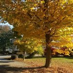 Gorgeous fall foliage outside James Place Inn