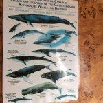 Foto de Encuentro con delfines con Animal Encounters