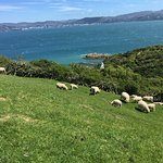 Very well preserved island, easy to walk around. You can see a few sheep on the peak. Good to sp