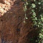Foto de Parque de Naturaleza La Reserva Puig de Galatzó