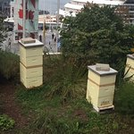Honey Bees on the 3rd provide Fresh Honey for hotel guests dining here