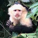 Just one of the monkeys seen on the Cano Negro river tour - we saw tons and very close up.