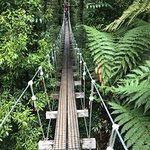 Photo of Rotorua Canopy Tours