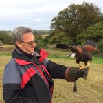My favourite part - Mally the Harris Hawk in the countryside