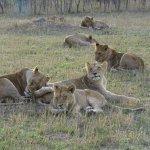 Bild från Idube Game Reserve Lodge