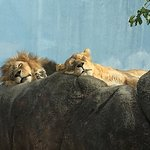 Rosamond Gifford Zoo Photo