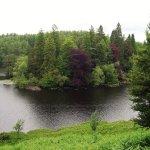 Many-coloured trees