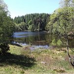 View from the lower part of the walk around Tarn Hows