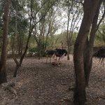 Photo of Dar es Salaam Zoo