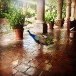 Foto de Hacienda El Carmen Hotel & Spa