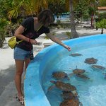 Feeding turtles with special food