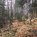 The Point Trail: km 3 - 4 birch forest