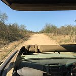 Photo of Outlook Safaris