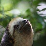 Amazon Ecopark Jungle Lodge Foto