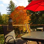 Patio overlooks a small creek and beautiful trees in the valley