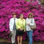Biltmore Estates Garden