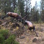 Bronze Elk, Entrance High Desert Museum, off HWY 97, south of Bend, OR