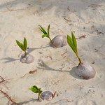 ростки пальм