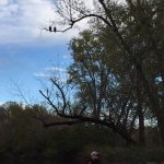 Two bald eagles and a young kayaker
