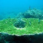 Plenty of beautiful hard corals
