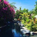 Poppies Bali Foto