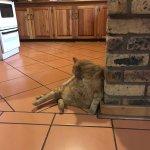 Photo de Thaba Tsweni Lodge & Safaris