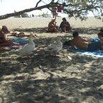 Na plaży turyści, ... dzikie gęsi
