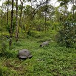Giant tortoises on the hotel hiking trail!