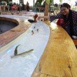Interesting fish tickling bar table