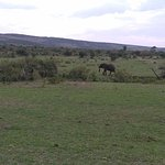 Kenya Safaris, Kenya Adventure Safaris, Kenya Budget Safaris, Kenya Camping Safaris, Kenya tours