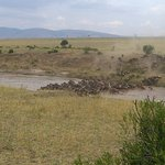 Wildebeest Migration, YHA Kenya Travel,kenya adventure camping safaris,kenya tours,masai mara ke