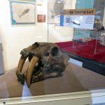 Foto Museum of Western Colorado: Dinosaur Journey Museum