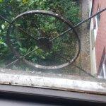 Bird poo on window ledge