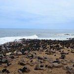 Many many seals