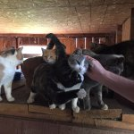 the friendliest barn cats, ever.