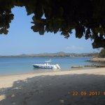 Photo of Corail Noir