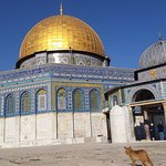 Dome of the Rock with Muslim kitty